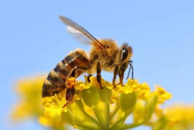 Bee Removal & Relocation in Wellington & Manawatu – Pestproof™
